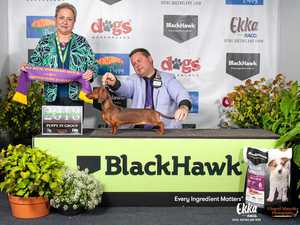 Champion sausages snag top dog awards at EKKA
