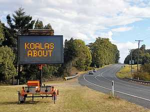 Flashing signs to help save koalas