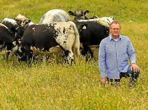 'The next wagyu beef': Farmer brings rare breed to town