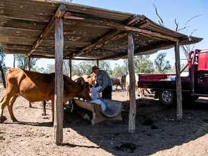 Farmer cuts back crops as drought hits hard