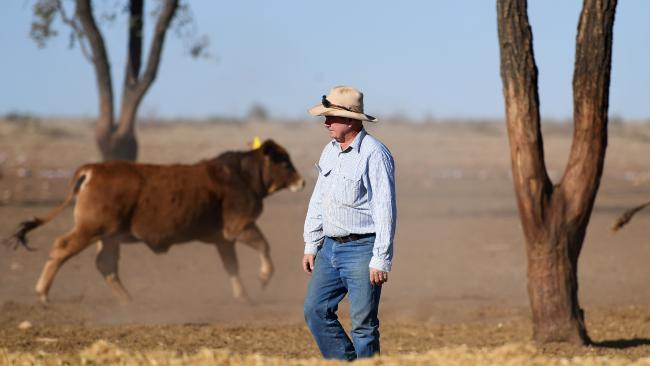 Farmer Peter