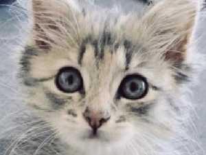 Fur flies over town's 'cat ban'