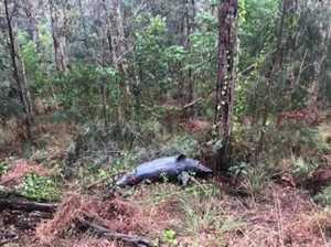 Dead dolphin found in bushland, police investigating