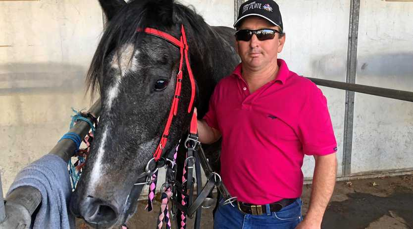 WINNING FORM: Arctic Circle, trained by Roma's Ben Waldron, won at Dalby last Saturday.