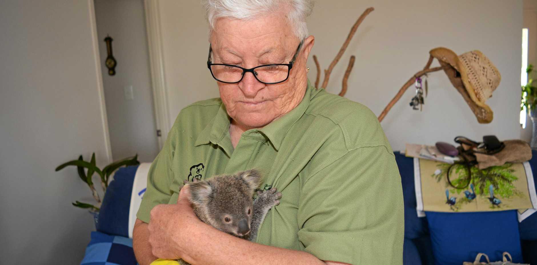 BIG CUDDLE: Ipswich Koala Society vice president Merilyn Spletter has helped over 90 koalas.