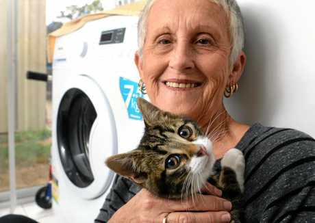Cleo the cat survived a spin in a washing machine. Carole Gay accidentally put her in the machine.