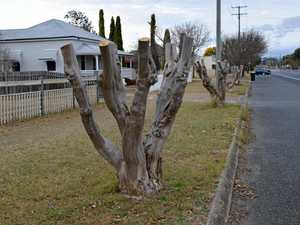 Mayor says town's trees will survive startling pruning