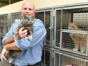 Council hosts cat adoption day
