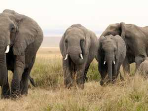 This could be the largest elephant poaching case ever seen