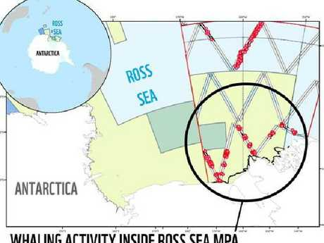 WWF today released this map showing Japanese whalers slaughtering minkes in Antarctica
