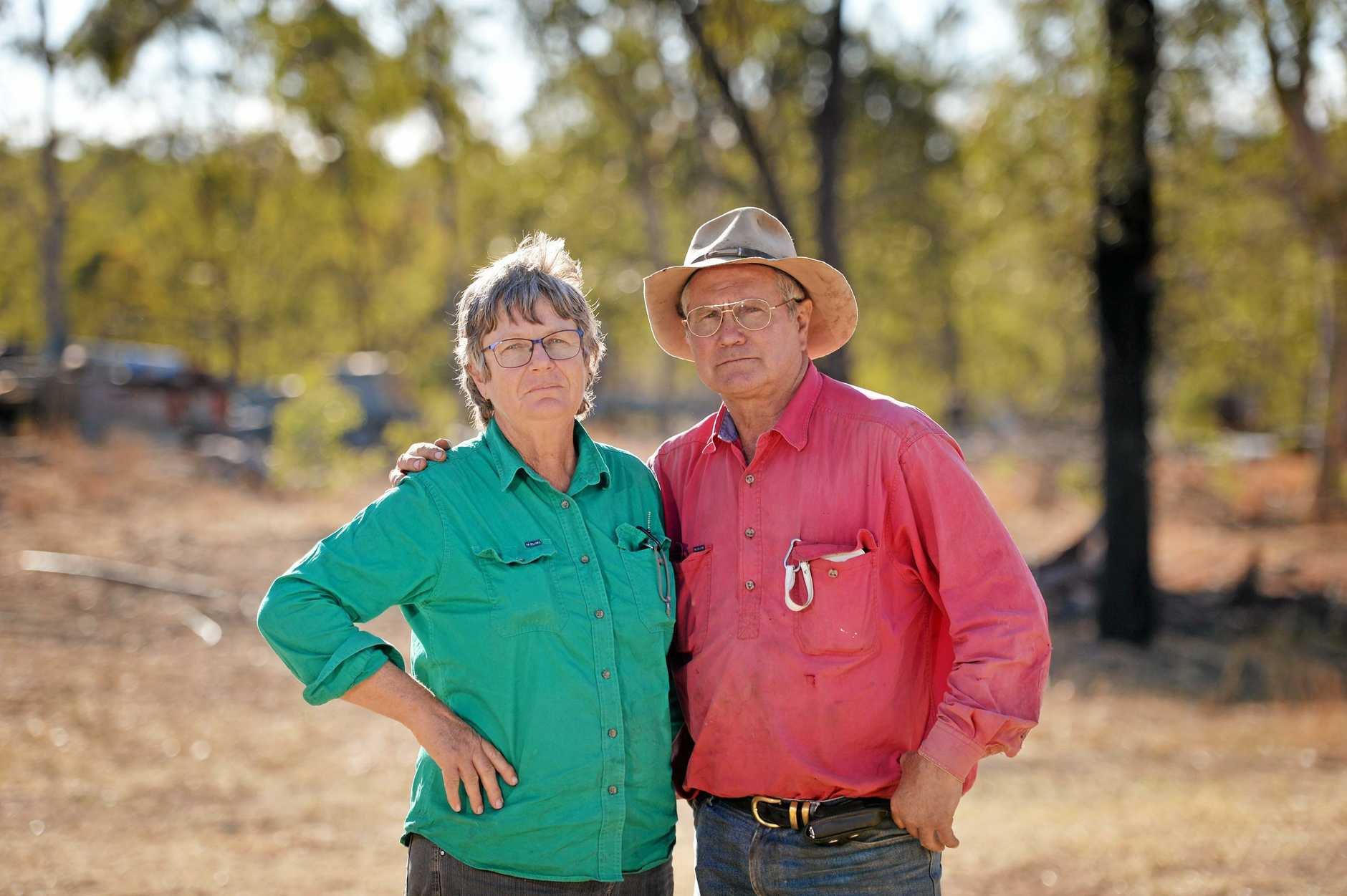Several cows have been mysteriously killed at Judy and Mick Cook's Eungella Hinterland property.