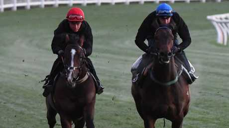 Hush Writer (left) will make his Australian debut at Moonee Valley on Saturday. Picture: Getty Images