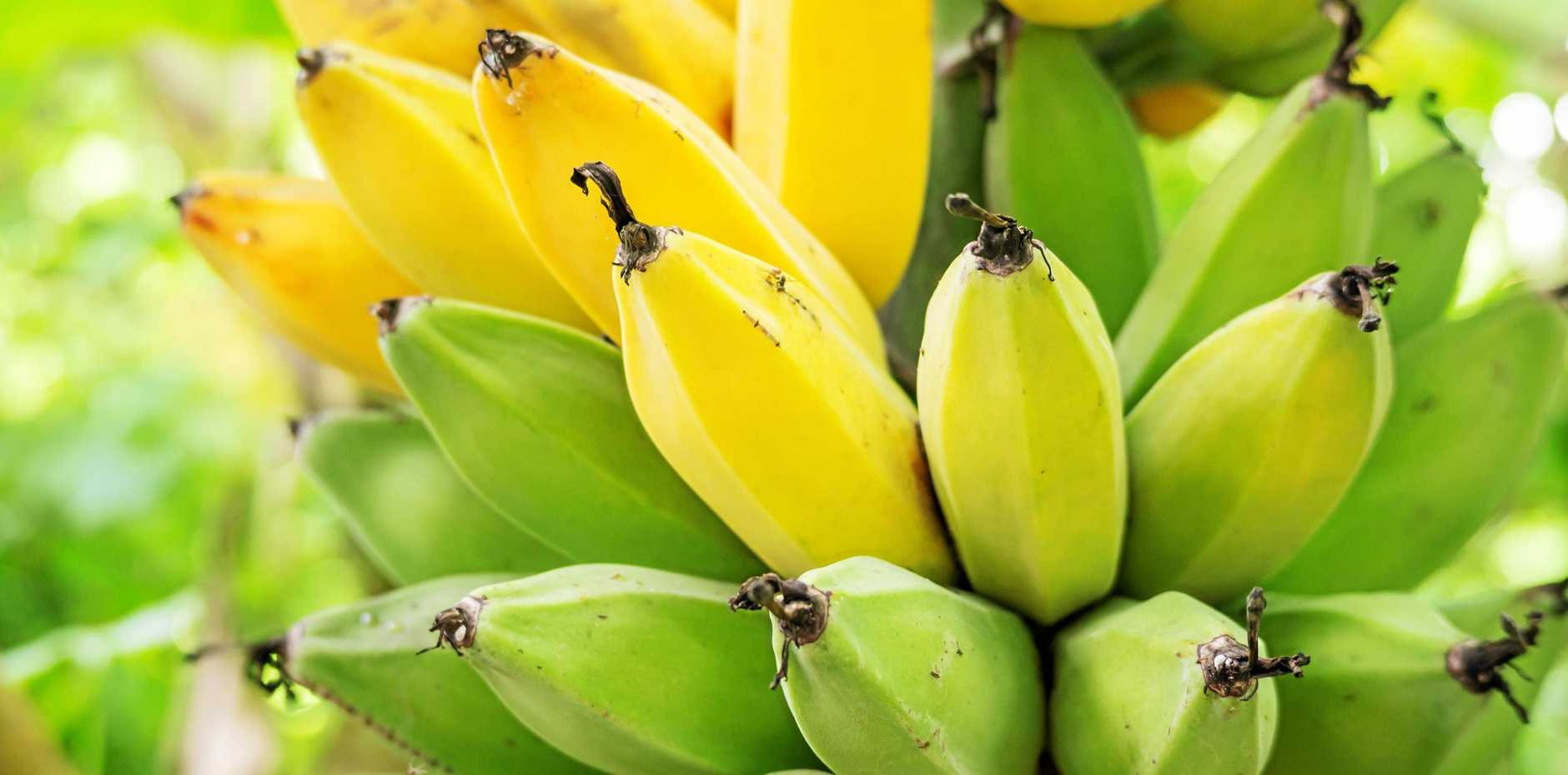 Bananas are great for muffins, cakes, smoothies and fruit salads.