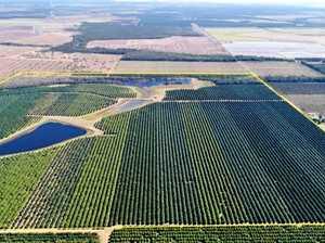 Qld macadamia plantation gains international attention
