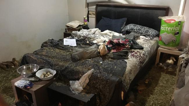 A bedroom overrun by fowl in Rachel Staines' Beaudesert home.