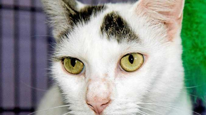 FELLA: This handsome five-year-old is a very chilled fella and loves cuddles. Fella's adoption fee is $200.