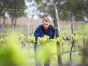 South Burnett winery tastes success