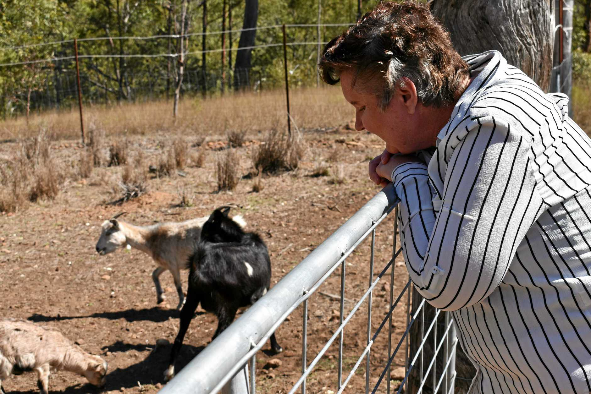 Michele Heckenburg watches some of the seven goats on her Grantham property.