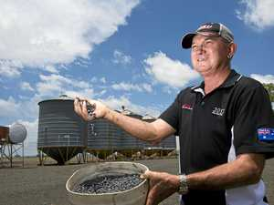Queensland pulses with new chickpea variety