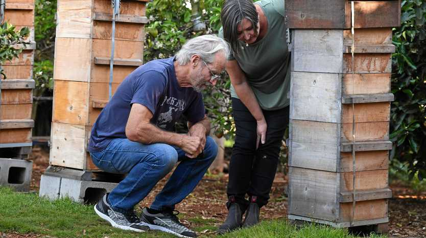 MYSTERY DEATH: Beekeepers Sandy Jeudwiner and Mark Fleming are dismayed to see the death of bees in the hives due to suspected poisoning.