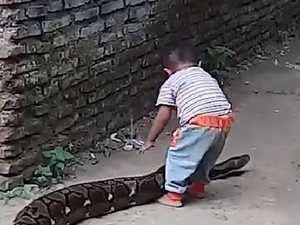 Toddler plays with massive python in shocking video