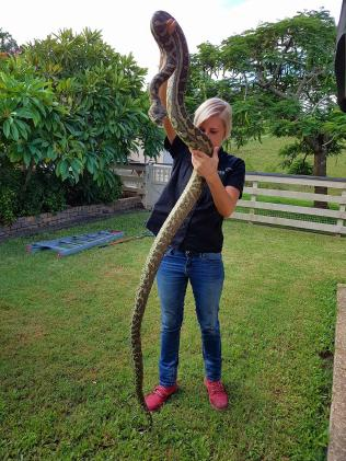 Harrison's wife Brooke with a big catch. Picture: Gold Coast Snake Catcher