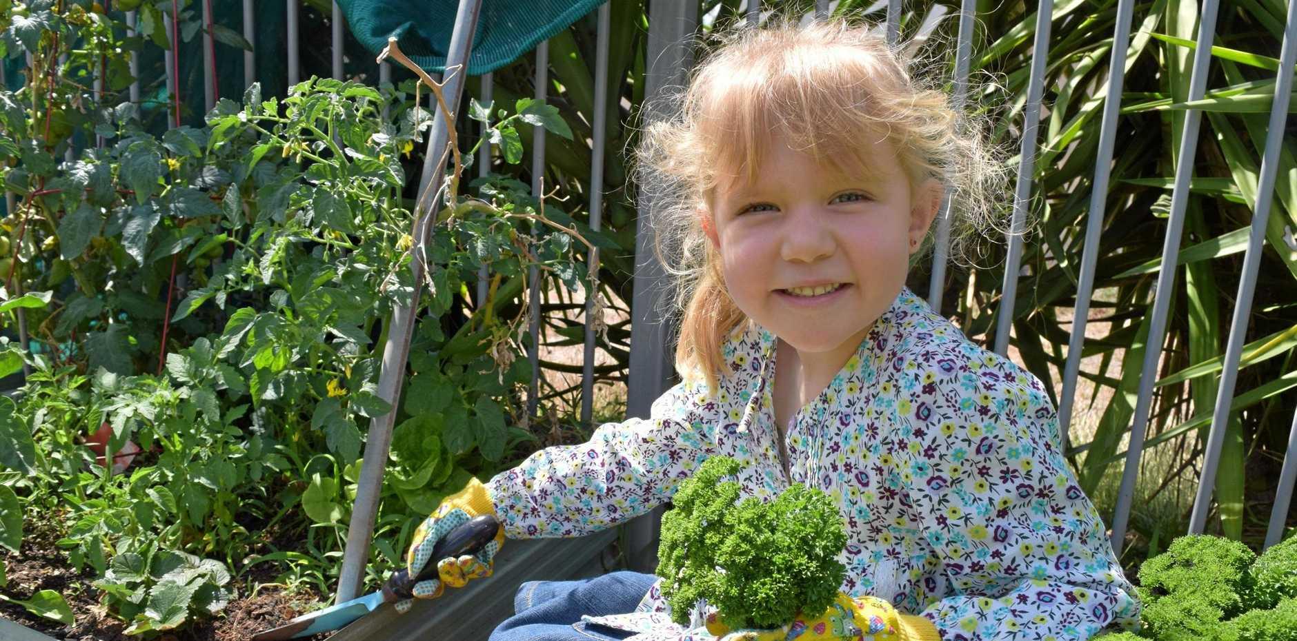 LITTLE GARDENER: Emerald's Isla Gilbert, 4, loves gardening and eating straight from her vegetable patch.