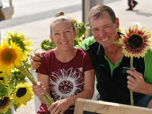 Market sunflowers a hit with shoppers