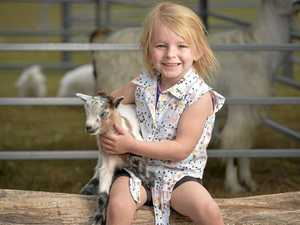 CUTE: Where you can meet three baby goats these holidays