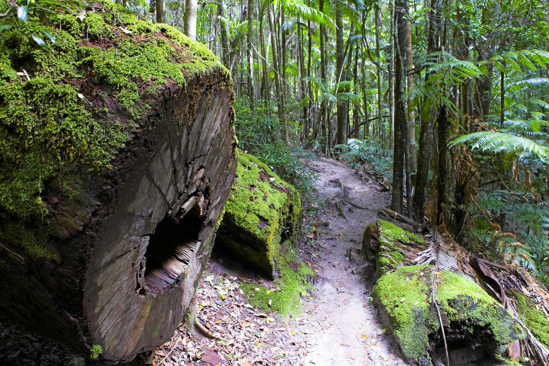 NATURAL WONDER: Fraser Island's Rainforests are now part of the Queen;s Commonwealth Canopy Initiative.