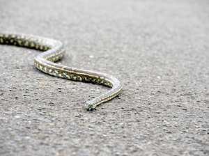 Snake attacks man in garden