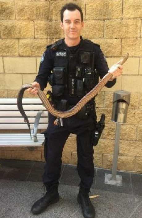 Loganholme Police catch red bellied black snake
