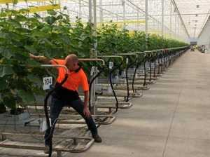National grower pitches new $60m Coast facility