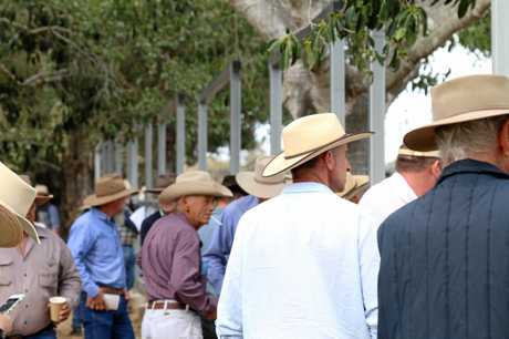 The crowd of 200 at the Woolooga saleyards.