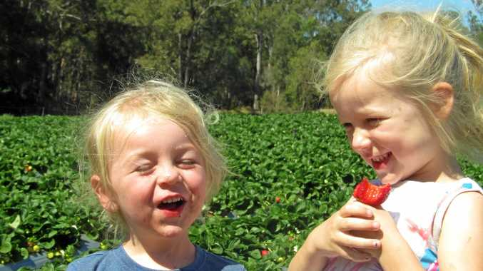 BERRY, BERRY HAPPY: Rick Tramacchi's grandchildren, Levi and Jada Peacock, are all part of a family tradition of growing strawberries with pride and love.