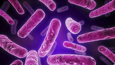 Close-ups of legionella bacteria.