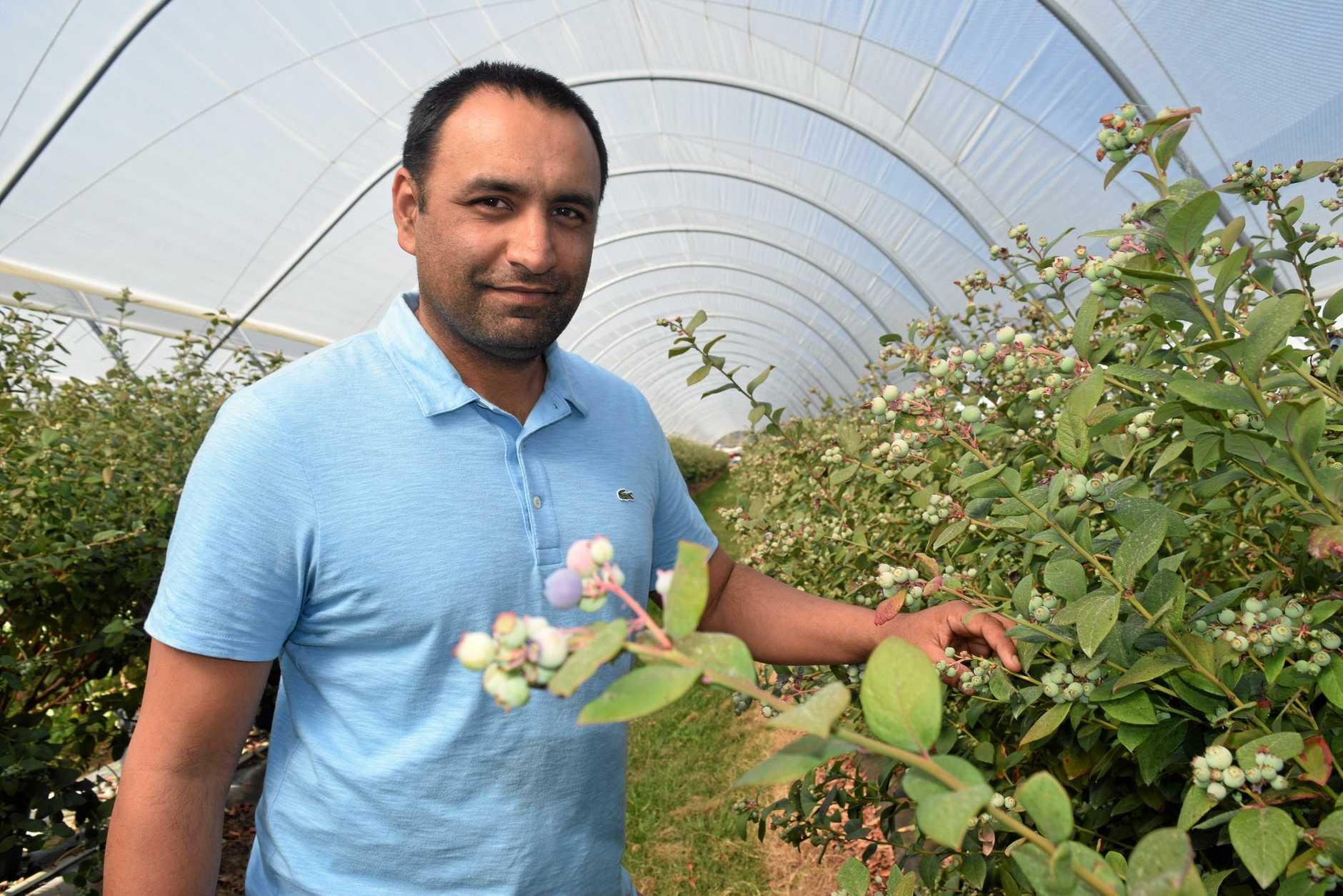 Oz Berries Co-operative chairman Gurmesh Singh.