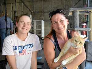 Hervey Bay's furry friends find new forever homes