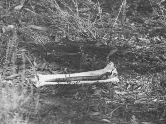 Mushroomers found bones in the bush near Truro and first thought they were a cow's.