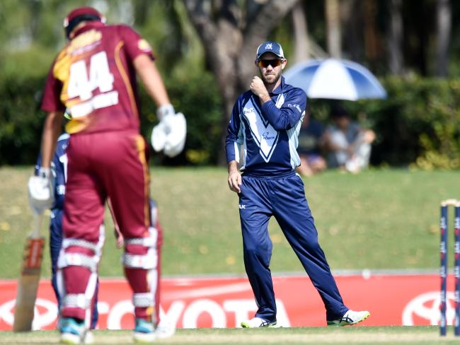 Glenn Maxwell played a crucial role in Victoria's gritty win over Queensland. Picture: Alix Sweeney