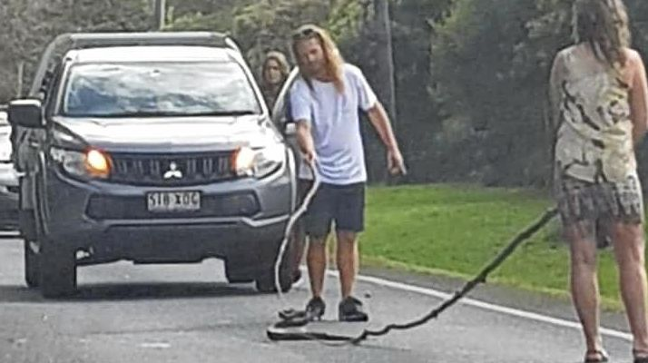 Motorists stop to remove a snake from Landsborough Maleny Road
