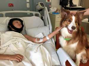 'Special moment': Dog aids boy's recovery after crash