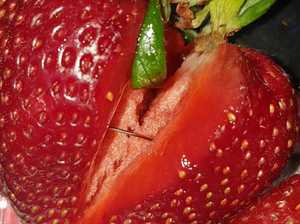 Strawberry sabotage saga goes global