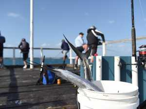 Urangan pier fishing - Fish caught at the end of