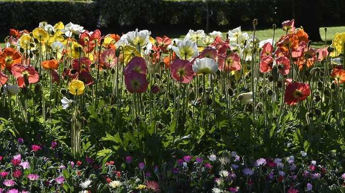 Garden warning issued ahead of carnival of flowers chronicle carnival of flowers 2018 laurel bank park september 2018 mightylinksfo