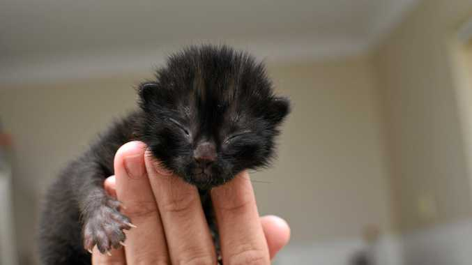 Tiny kitten found dumped in takeaway bag at Coles loo