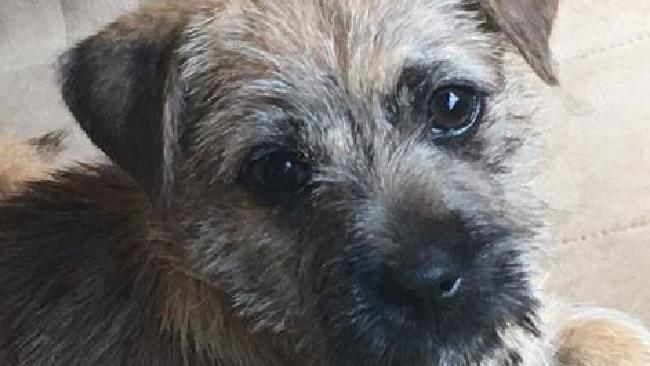 Malanda resident Che-che and Patrick Zimmerman have lost their beloved puppy Bumbles after she licked bait on a camping trip near Chillagoe. PHOTO: Supplied.