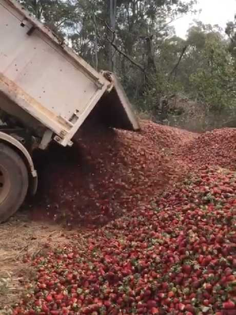 Another truckload is dumped at the Donnybrook Berries farm.