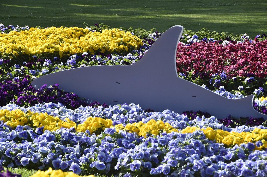Carnival of Flowers 2018. Laurel Bank Park. September 2018