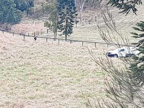An animal control officer searches a Cambroon property after a deer was shot but not killed as part of an eradication program.
